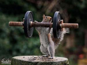 Zvířecí workout – Pořádna dávka od našich mazlíčků